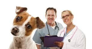 Veterinary Medicine and Veterinary Research