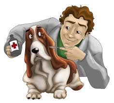 Scope of Veterinary Medicine in Pakistan, Career, Courses, Jobs, Required Skills