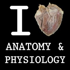 Career & Scope of Anatomy in Pakistan, Intro, Pay, Benefits & Job Types