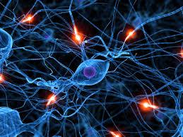 neuroscience12